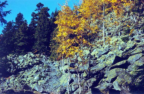 http://carpathians.org.ua/images/Gorgany/vstup-g02.jpg